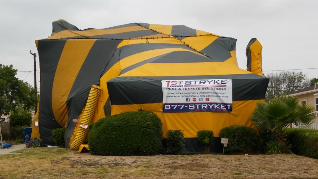 Fumigation & Fumigation - 1st Stryke Pest and Termite Control - Norwalk CA